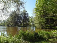 View of the carp lake on a beautiful spring day. www.frenchcarpandcats.com