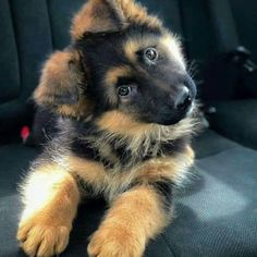 """JG 💙💙 #SYWBAP on Twitter: """"Last one today 💙💙💙👇… """" Super Cute Puppies, Cute Baby Dogs, Cute Little Puppies, Super Cute Animals, Cute Dogs And Puppies, Cute Funny Animals, Cute Baby Animals, Fluffy Animals, Doggies"""