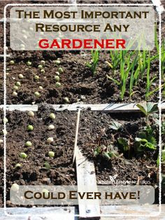 The Most Important Resource Any Gardener Could Ever Have | WholeLifestyleNut... #gardening