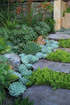 A waterfall of Echeveria  elegans by David Feix Landscape Design, via Flickr