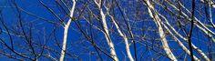Sentiero Sottile di Ebe Navarini | #Spiritualità e #PermaCultura come in Alto così in Basso