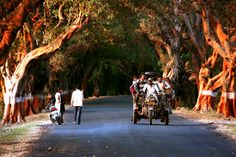 Andrew, Gujarat, India