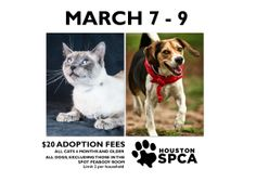 Cats six months of age and older and dogs (excluding those in the Spot Peabody Room) at the Houston SPCA will be available to approved adopters for an adoption fee of $20 from March 7-9 (limit two per household). Each adoption package is well worth over $400!  You can see all of our adoptable animals at http://www.houstonspca.org/site/PageNavigator/adopt_main.