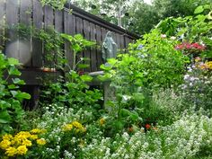 Summer Mary Garden photograph; Villa Park, IL, photo by Jeanette O'Toole, 8-7-14