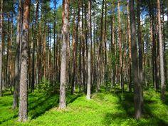 Metsän arvo on monessa määrin mittaamaton. Esimerkiksi myrskyn varalta metsänomistaja voi kuitenkin taloudellisesti varautua metsävakuutuksella: http://www.lahitapiola.fi/www/Maa_ja_metsataloudet/Vakuutukset/Metsavakuutus_ja_metsaraha/etusivu.htm