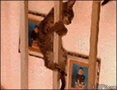 Fireman kitten is a terrible fireman.