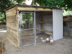 Dog Kennel converted to a Chicken Coop