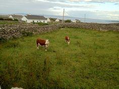 The lush irish countryside