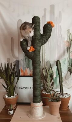 Cactus for cats catcus scratching post cat tree boho cat tower funny farm animals cattle mini cows Cat Tree Designs, Cat Scratching Tree, Tall Cat Scratching Post, Cactus Cat, Cactus Plants, Diy Cat Tree, Best Cat Tree, Cat Trees Diy Easy, Cool Cat Trees