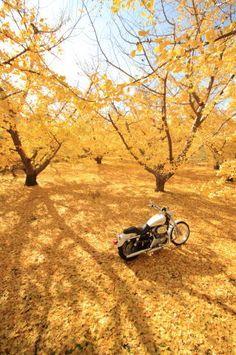 第7回フォトコンテスト「ツーリングで出会った秋」グランプリ:黄色い部屋・ミニュー隊長さん