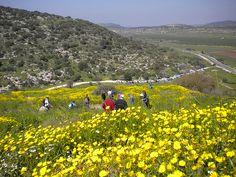 Wildflower Fields Beit Shemesh israel