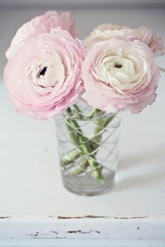 Pink ranunculus.