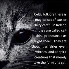 Animal Facts, Cat Facts, Cat Quotes, Animal Quotes, Crazy Cat Lady, Crazy Cats, Beautiful Cats, Cat Life, Spirit Animal