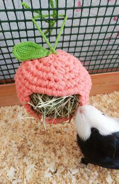 Informations About Guinea pig hay feeder. Small pet accessories for cage. Diy Guinea Pig Cage, Guinea Pig House, Pet Guinea Pigs, Guinea Pig Care, Guinea Pig Accessories, Pet Accessories, Hay Feeder, Little Live Pets, Guniea Pig