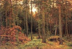 Pine Wood Ivan Ivanovich Shishkin - 1885