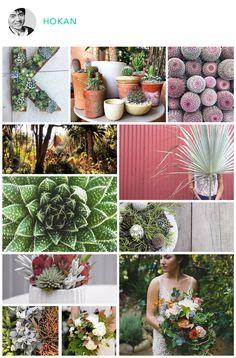 succulents on maketrays.com