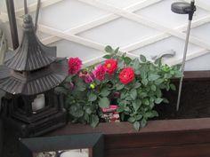 MySTYLE GARDEN.  Flowers. ORIENTAL. Simple. Beauty.