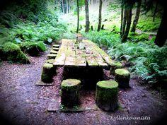 Metsäpuutarha Irlannissa