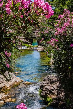 Straight off the pages of a Fairytale Wonderland, this magical sight would surely take your breath away anytime. Adorn your garden streams with pink blossoms and flowing bridges. #Zen www.asiahomegarden.com