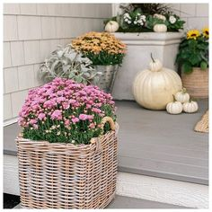 "Kelowna Garden Centre on Instagram: ""Happy October 1st 💛🧡💚🍂 ∘ ∘ ∘ #falllove #falldecor #falldecorations #pansies #dustymiller #scothheather #fallstoop #pumpkins #mums…"""