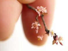 Cherry blossom - APRICOT JAM