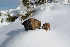 Schleich american bison and cub American Bison, Cubs, Snow, Outdoor, Bear Cubs, Outdoors, Puppys, Outdoor Games, Tiger Cubs