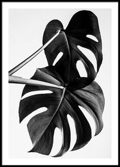 Monstera B&W two Poster in the group New in at Desenio AB (8973)