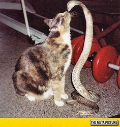 Once Again, Curiosity Killed the Cat