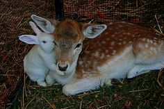 Deer & Bunny Love by X POSE, via Flickr