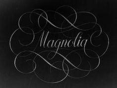 Magnolia by Florin Capota