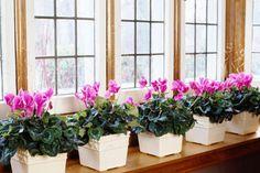 How to Build an Indoor Window Garden