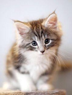 gabytaangeles:  Kitty on We Heart Ithttp://weheartit.com/entry/94335040/via/Luna_mi_Angel
