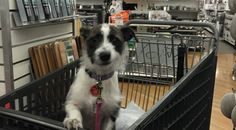 More and more stores are allowing dogs! Find out which one and read some tips for shopping with them!