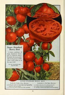 Botanical Art Study: Free Botanical illustration Books