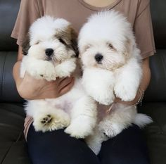 16 Cutest Puppies That Will Melt Your Heart - Dog Breed - Chien Cute Dogs And Puppies, I Love Dogs, Doggies, Fluffy Puppies, Puppies Puppies, Cutest Dogs, Cute Fluffy Dogs, Dalmatian Puppies, Collie Puppies