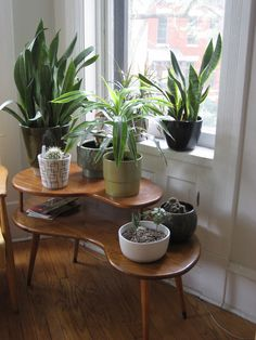 plants + table mid century mod
