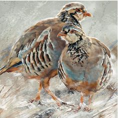 Red Legged Partridge by Debbie Boon. Buy Art or Framed Artwork online with FREE UK Mainland Delivery Watercolor Bird, Watercolor Animals, Watercolor Paintings, Original Paintings, Watercolors, What Is An Artist, Wild Tattoo, Wildlife Art, Stretched Canvas Prints