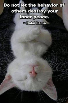 """Do not let the behavior of others destroy your inner peace."" - Dalai Lama #quote #cat How cute is this picture?"