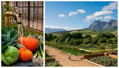 Babylonstoren in the Cape Winelands. Visit the Babel restaurant for a top-class meal, fresh from the garden or explore around the vineyards. Cape Dutch, Signature Cocktail, High Tea, Cape Town, Vineyard, Meal, Plate, Pumpkin, African