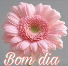 Bom dia flor do dia! Shabby Chic Baby Shower, Budget Template, Big Flowers, Good Morning Quotes, Night Quotes, Kindergarten Activities, Happy Day, Healthy Dinner Recipes, Healthy Snacks