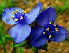 Jardin et Fleurs: Fleurs dhiver