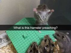 37 Of The Best Funny Animal Pictures Ever