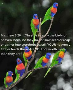 Matthew 6:26 ...Observe intently the birds of heaven, because they do not sow seed or reap or gather into storehouses; still YOUR heavenly Father feeds them. Are YOU not worth more than they are?