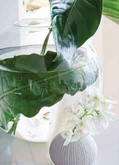 Obsessed with the freshness of palm leaves in a clear glass vase