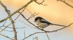 little bird ...