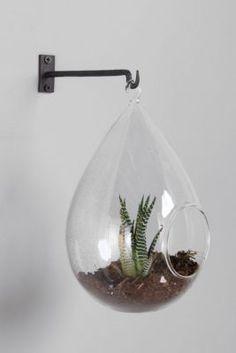 Teardrop Hanging Terrarium