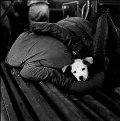 Wayne Miller - Puppy Snuggled Inside Body Armor Aboard a US Patrol Torpedo (P.T) Boat, the Philippines - 1944 - Wayne Miller, Magnum Photography Great Wayne Miller, Animal Pictures, Cute Pictures, War Of The Pacific, Pt Boat, Anatole France, Artwork Display, Magnum Photos, Dogs Of The World