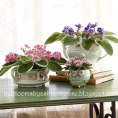 my violets in my vintage china shot for a garden magazine