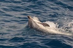 Dolfijnen in de Middelandse Zee!