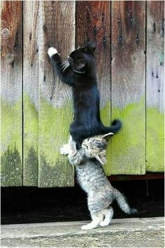 A cat will be everytime help another cat XD